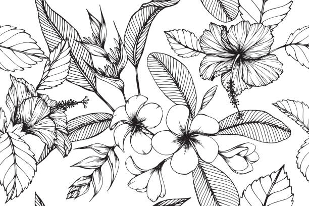 Hawaiian pattern seamless background with flower and leaf  drawing illustration. Hawaiian pattern seamless background with flower and leaf  drawing illustration. frangipani stock illustrations