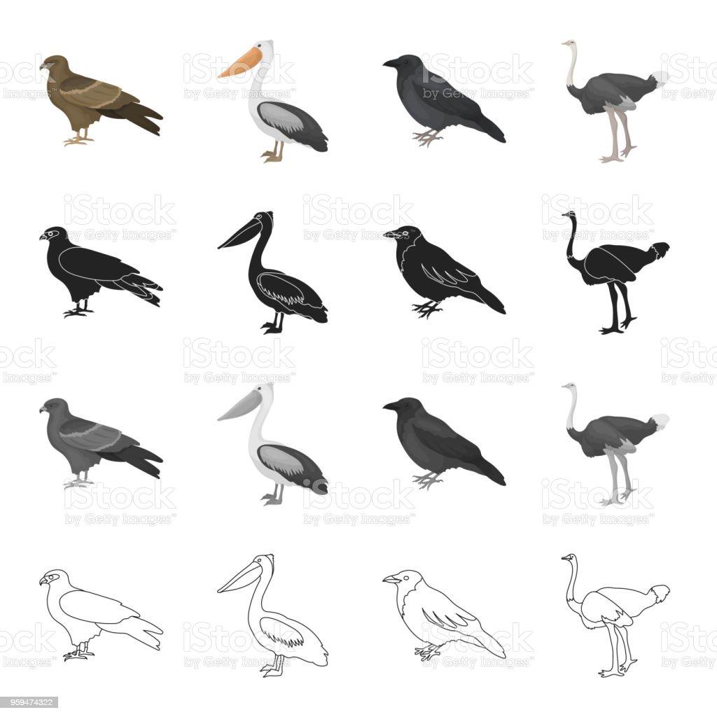 Ein Falke Ein Raubvogel Ein Pelikan Eine Graue Krähe Ein Emu Strauß ...