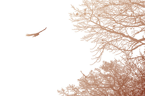 Hawk flying above trees
