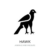 hawk icon vector on white background, hawk trendy filled icons from Animals and wildlife collection