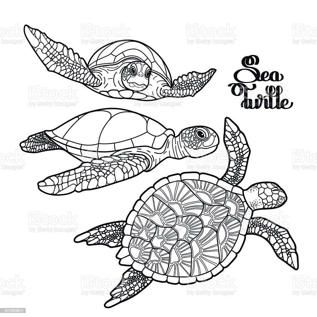 Karettschildkröte Meeresschildkröte Kollektion Stock Vektor Art und ...