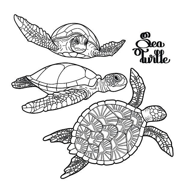hawksbill sea turtle collection - turtle stock illustrations