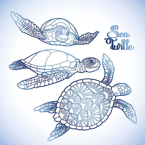 タイマイ 海 カメ コレクション - マリンのタトゥー点のイラスト素材/クリップアート素材/マンガ素材/アイコン素材