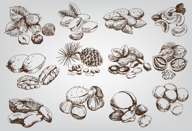 орехи - nuts stock illustrations