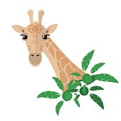Head and neck of a giraffe in a flat style postcard With green tropical plants