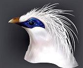Head Bali Myna Leucopsar rothschildi rare endemic bird