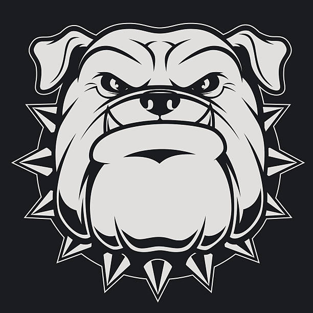 Head ferocious bulldog Vector illustration head ferocious bulldog mascot, on a black background mascot stock illustrations