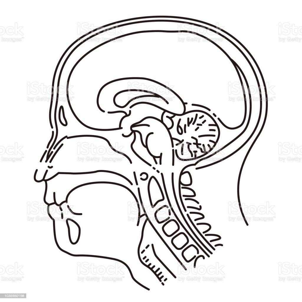 Head illustration of MRI examination vector art illustration