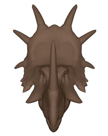 Head of a dinosaur
