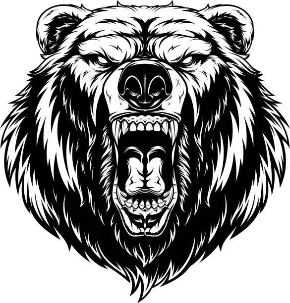 Head of a ferocious bear Vector illustration, head of a ferocious grizzly bear, contour on a white background bear stock illustrations