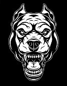 Vector illustration, the head of a ferocious pit bull grins, on a black background