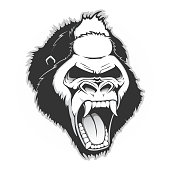 Head of a gorilla. Vector illustration
