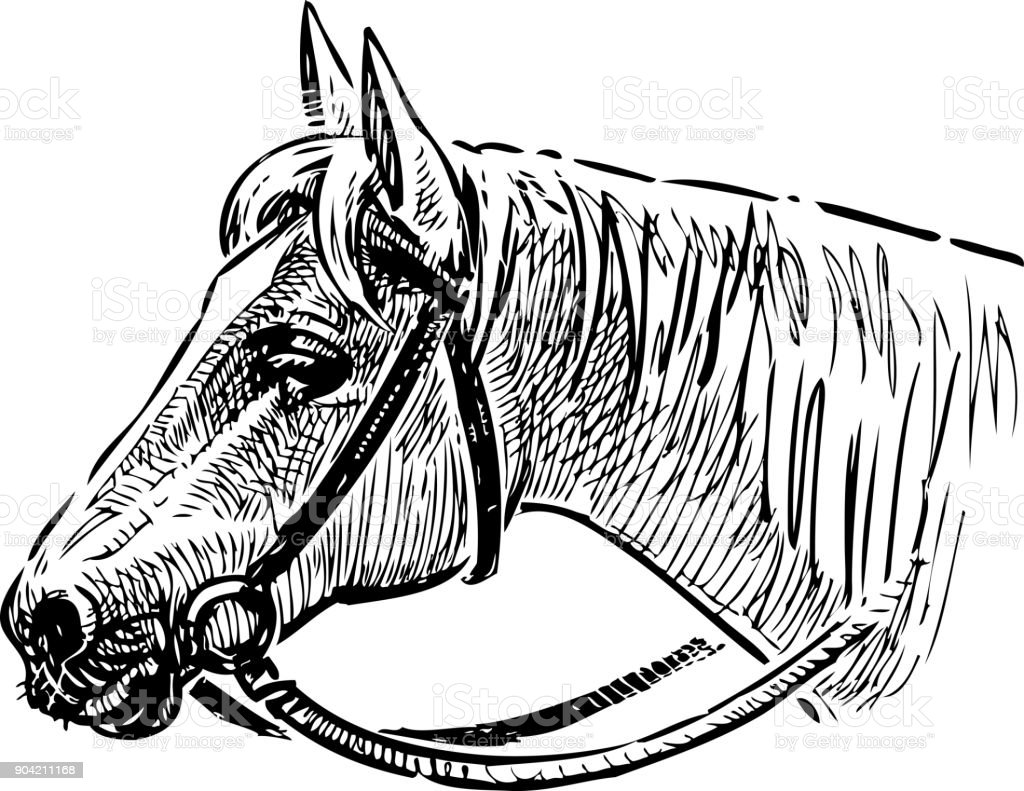 Head of a horse in a bridle vector art illustration