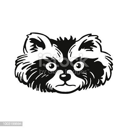 Head of a Raccoon