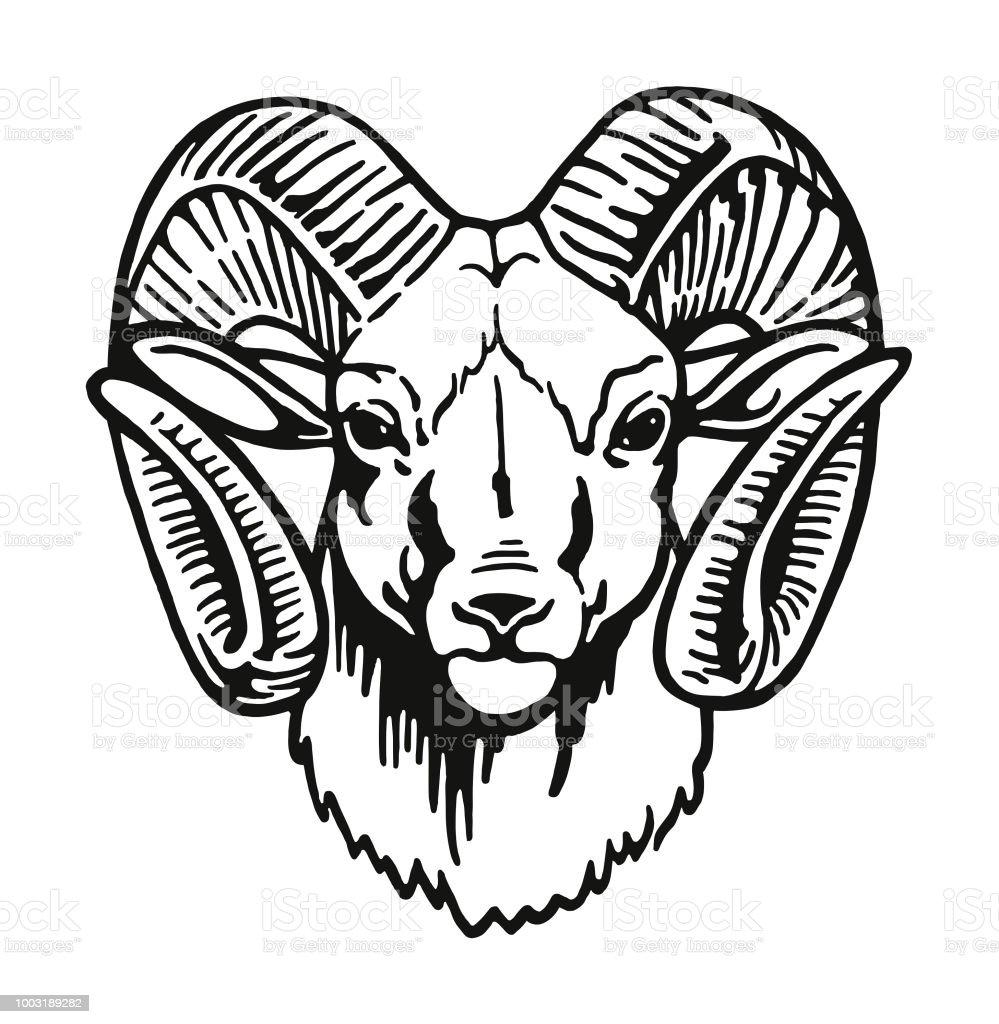 Head of a Ram – artystyczna grafika wektorowa