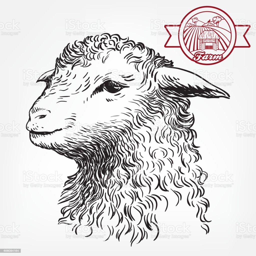 Tête d'un mouton. l'Elevage - Illustration vectorielle