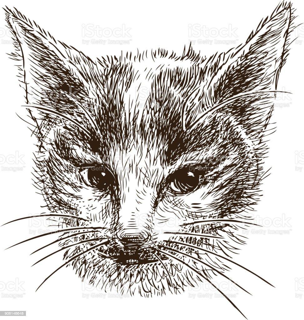 Head of a small kitten vector art illustration