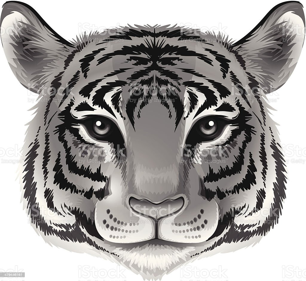 Head of a tiger in grey color royalty-free head of a tiger in grey color stock vector art & more images of animal