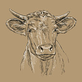 istock Head of bull head vector illustration brown 1272601242