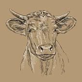 Head of bull head vector illustration brown
