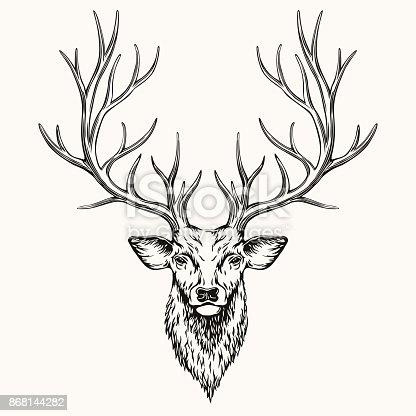 Head of deer, hand drawn illustration, EPS 8.