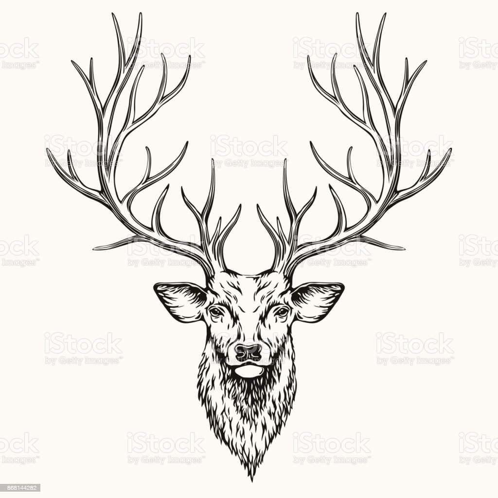 Head of Deer vector art illustration