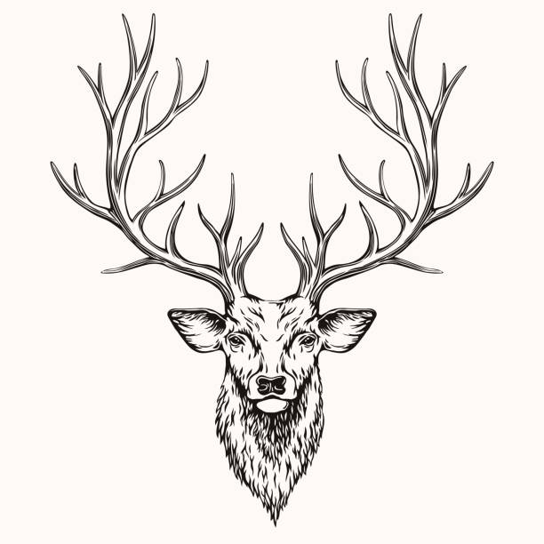 head of deer - deer antlers stock illustrations, clip art, cartoons, & icons