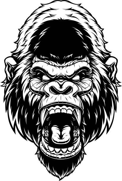 Head of fierce gorilla Vector illustration, ferocious gorilla's head screaming, black contour on white background. gorilla stock illustrations