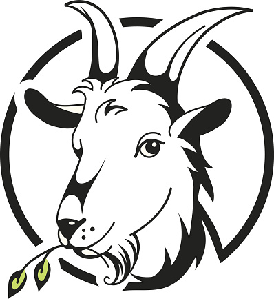 Head of goat on white background