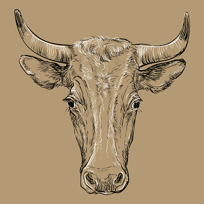 Head of horned bull vector illustration brown