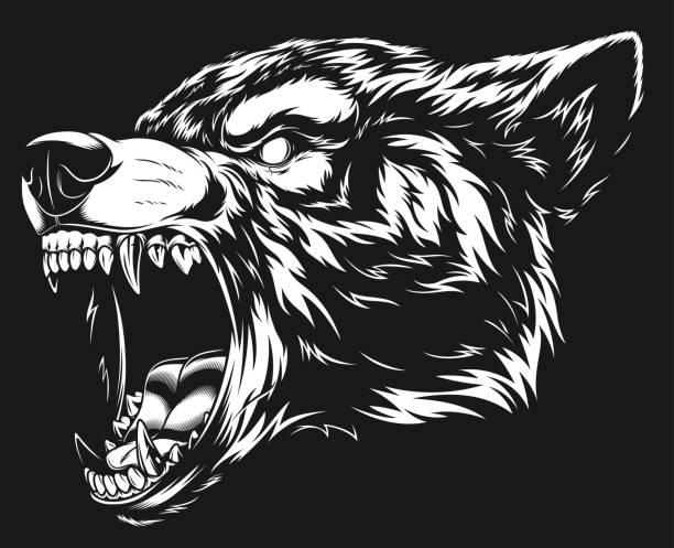 Head of the ferocious wolf Vector illustration head ferocious wolf, outline silhouette on a black background werewolf stock illustrations