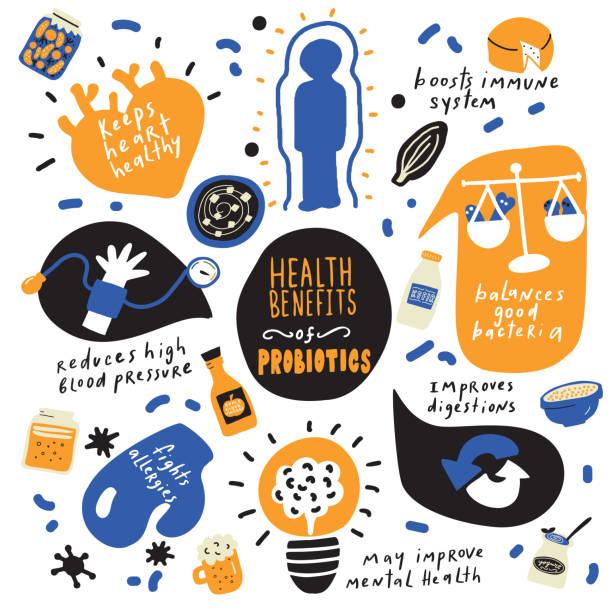 gesundheitliche vorteile von probiotika. handgezeichnetes infografieklakat. vektor. doodles. - sauerkraut stock-grafiken, -clipart, -cartoons und -symbole