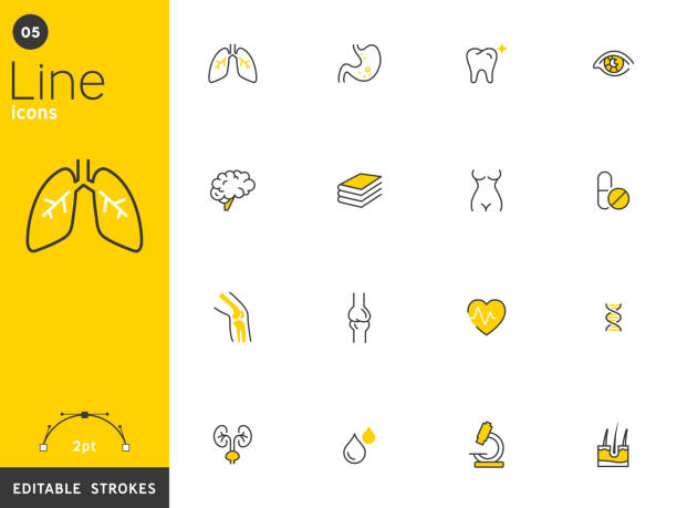 Healthcare and medical line icons collection, editable strokes. For mobile concepts and web apps. Vector illustration, clean flat design Healthcare and medical line icons collection, editable strokes. For mobile concepts and web apps. Vector illustration, clean flat design. human nervous system stock illustrations