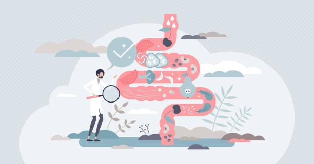 Healthy bowel examination as gastrological organ checkup tiny person concept vector art illustration