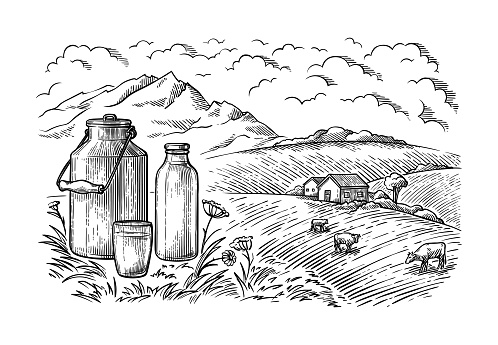 healthy Breakfast drawing sketch glass milk bottle iron can cup field cow vilage vector