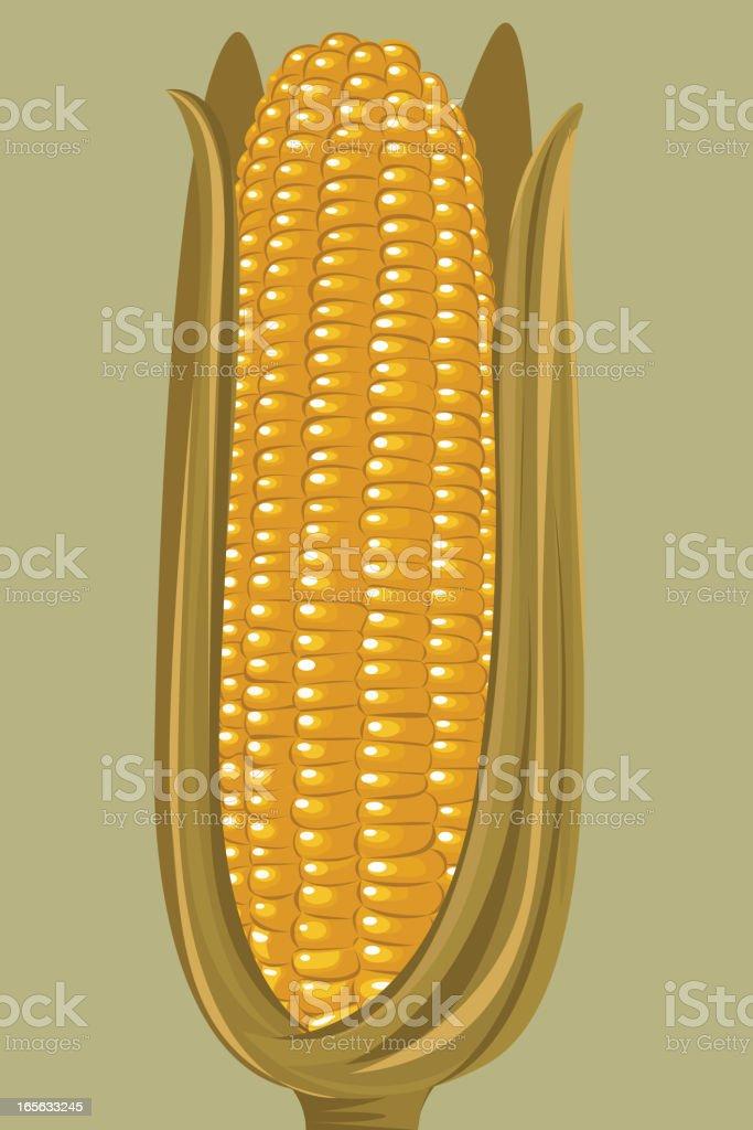 Healthy Corn royalty-free stock vector art