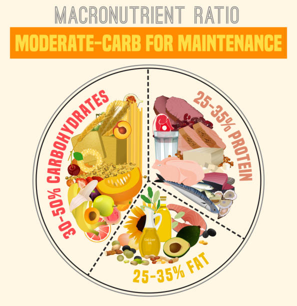 Healthy Eating Plate Moderate carbohydrate diet diagram. Macronutrient ratio poster. Health maintenance concept. Colourful vector illustration isolated on a light beige background. Healthy eating concept. glycemic index stock illustrations