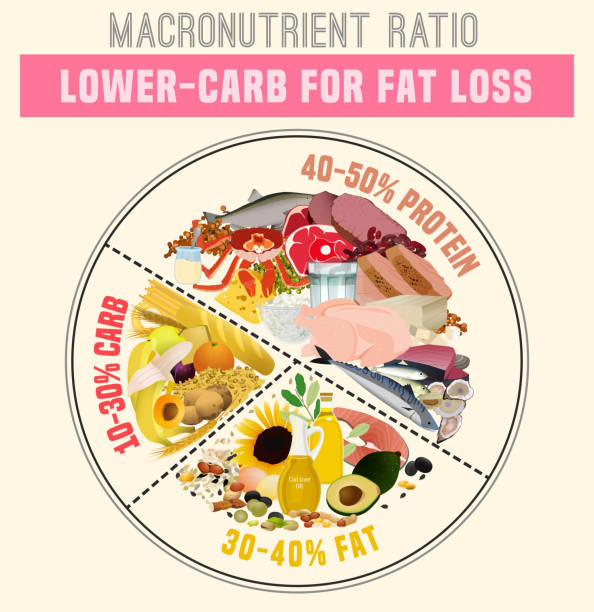 Healthy Eating Plate Low carbohydrate diet diagram. Macronutrient ratio poster. Fat loss concept. Colourful vector illustration isolated on a light beige background. Healthy eating concept. glycemic index stock illustrations