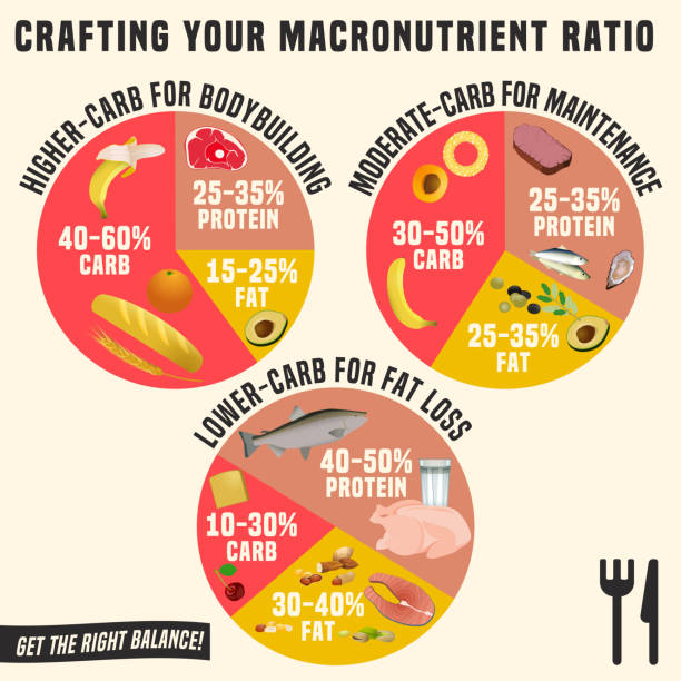 Healthy Eating Plates Crafting your macronutrient ratio. Fat loss, bodybuilding and health maintenance diets diagrams. Colourful vector illustration isolated on a light beige background. Healthy eating concept. glycemic index stock illustrations