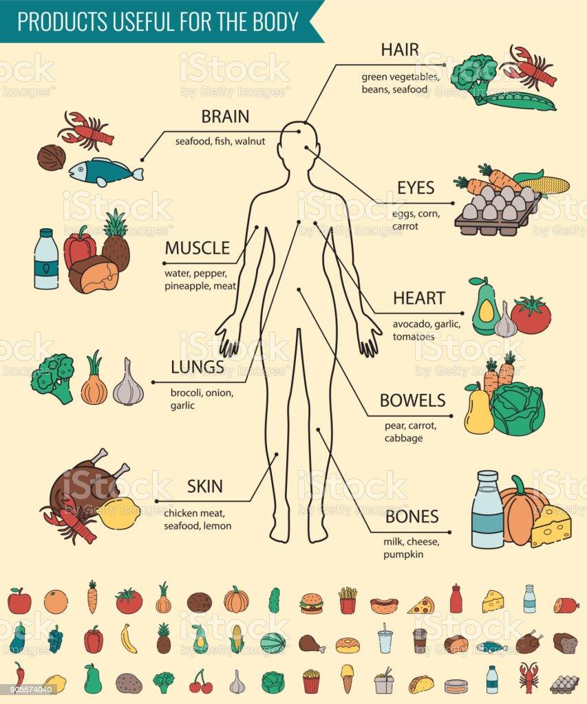 Gesunde Lebensmittel Für Den Menschlichen Körper Gesunde Ernährung ...