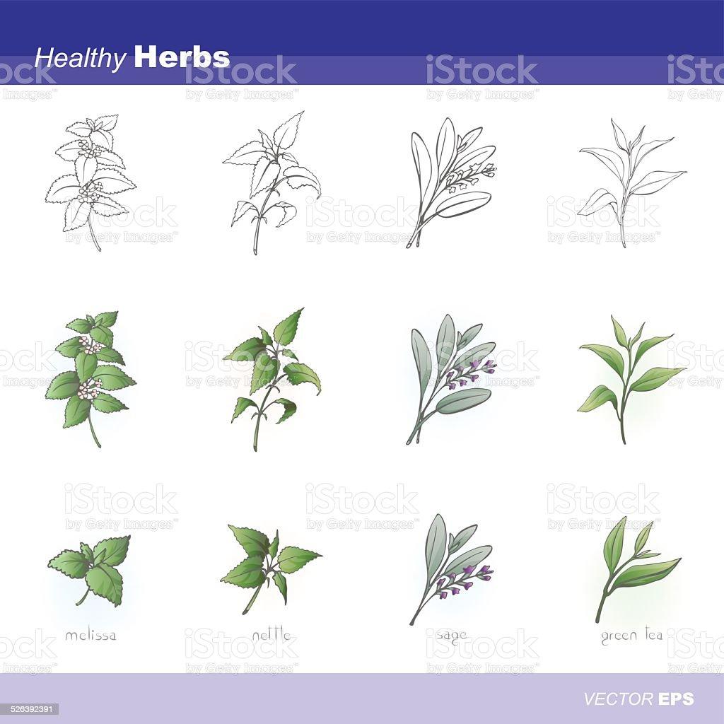 Healthy herbs vector art illustration