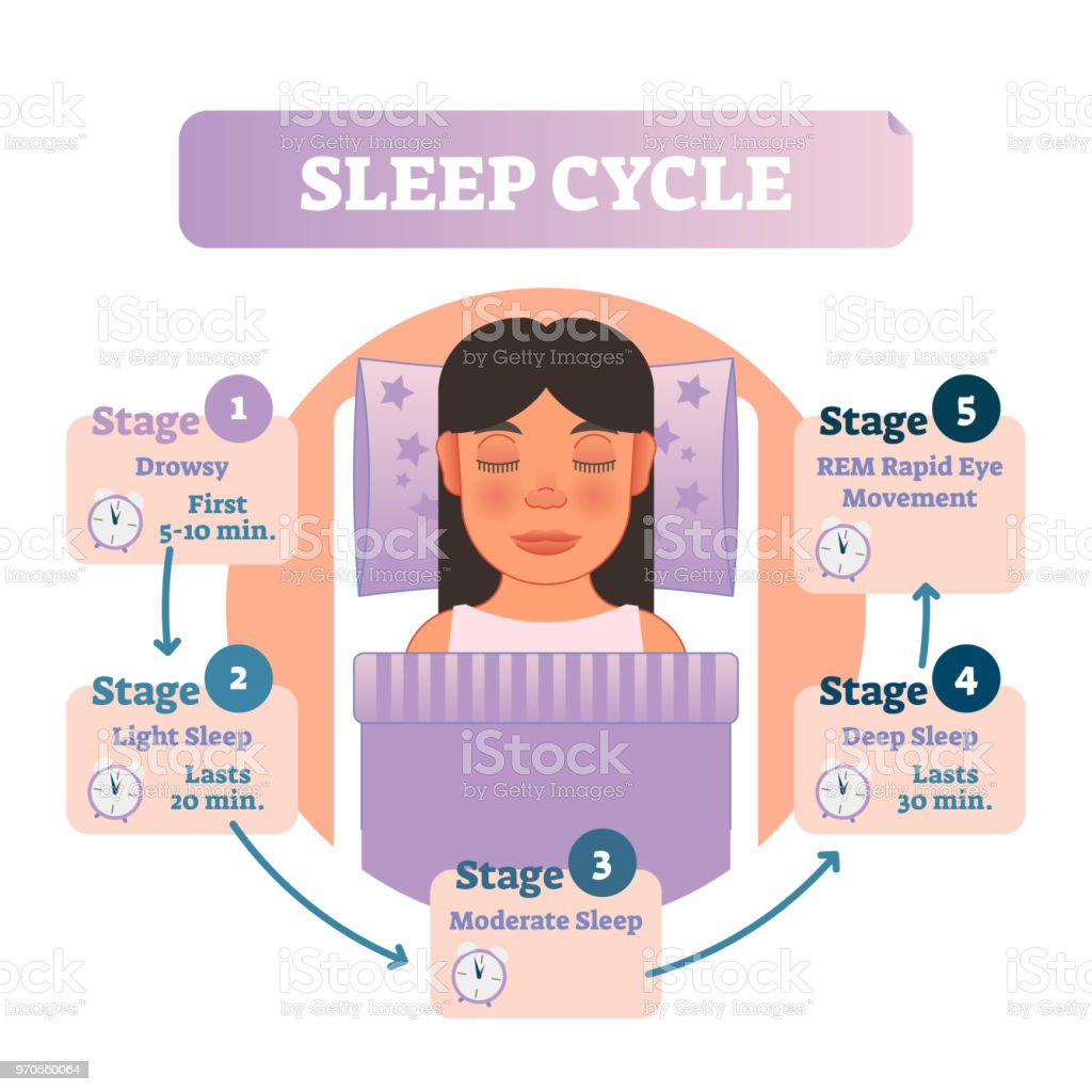 Healthy human sleep cycle vector illustration diagram with female in bed and sleep stages. Educational infographic scheme. vector art illustration