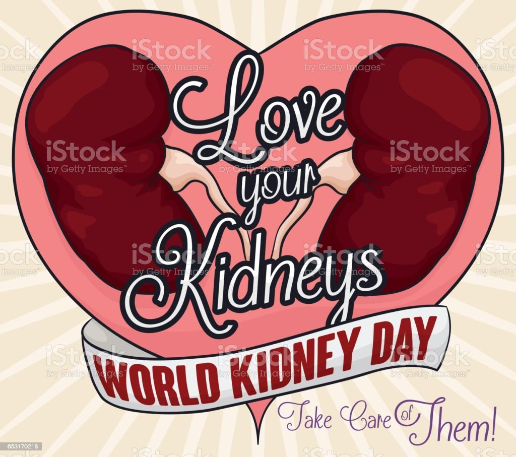 Healthy Kidneys And Greeting Message Of Love And Renal Care Stock