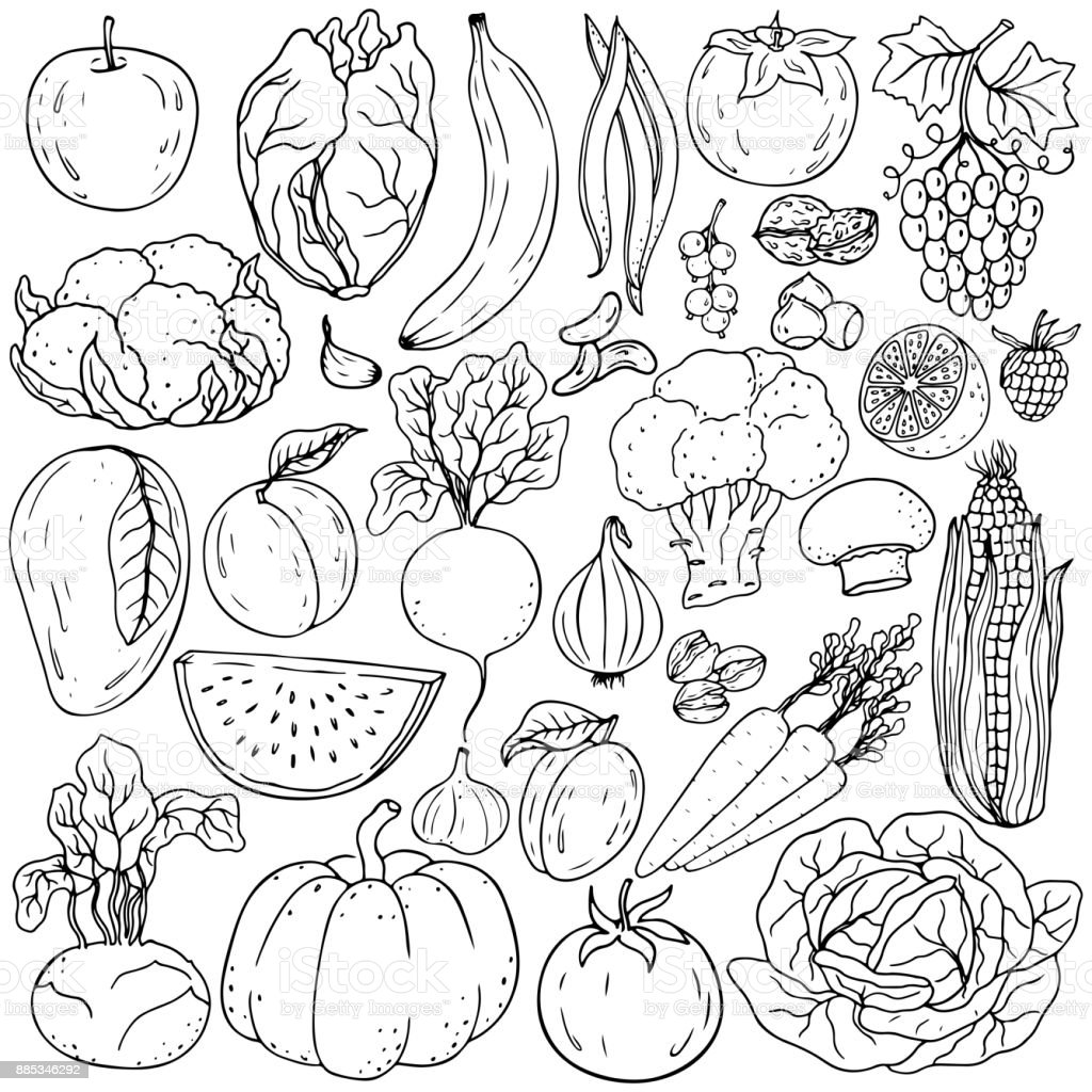 Healthy lifestyle vector design elements. Healthy hand-drawing colorful vegetables , fruits, berries, nuts, mushrooms vector art illustration