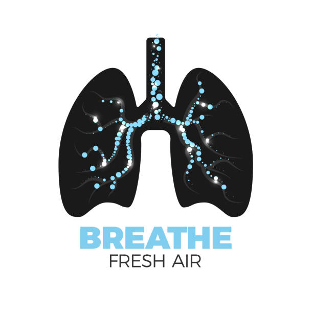 Healthy lungs icon Healthy lungs vector icon. Fresh air breathing concept. Lungs silhouette with bronchi full of air bulbs. Isolated on white background. Stop smoking! lung stock illustrations