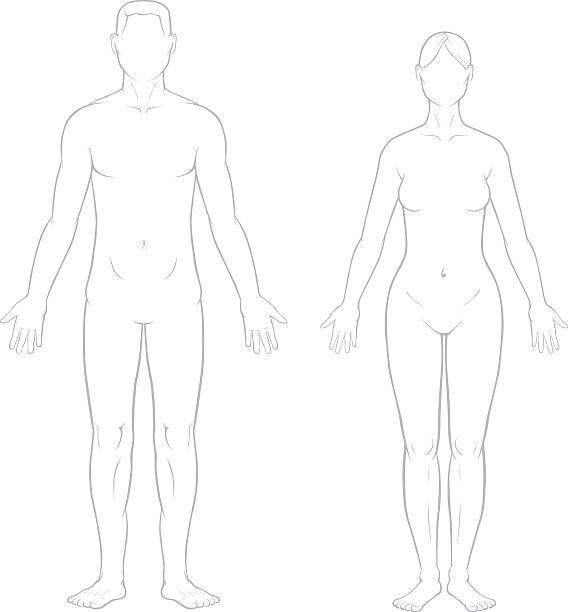 illustrazioni stock, clip art, cartoni animati e icone di tendenza di maschio e femmina corpo sano - il corpo umano