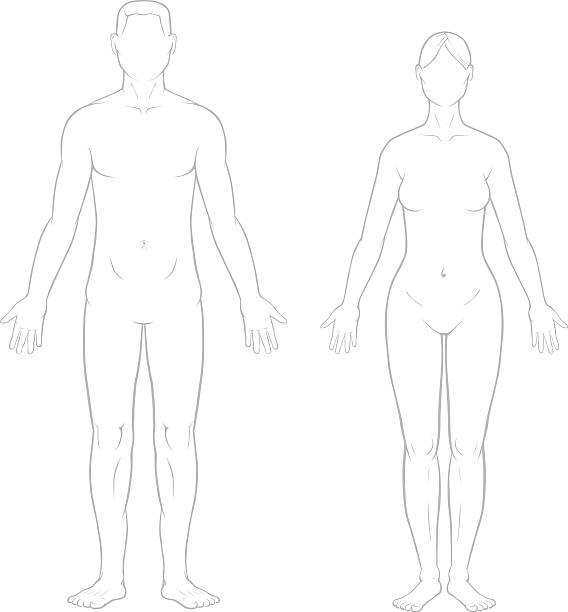 Healthy Male and Female Bodies A detailed accurate drawing of the male and female bodies.  human representation stock illustrations