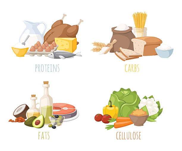 Healthy nutrition, proteins fats carbohydrates balanced diet, cooking, culinary and Healthy nutrition, proteins fats carbohydrates balanced diet, cooking, culinary and food concept vector. Healthy nutrition proteins fats carbohydrates vegetables fruits, meat and healthy nutrition. protein stock illustrations