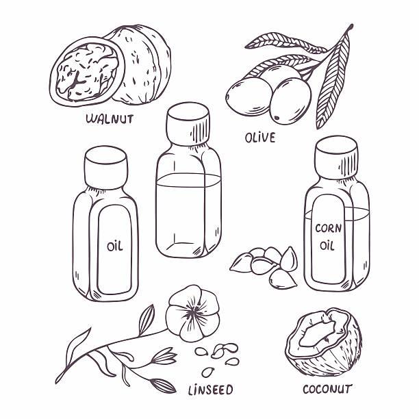 ilustrações de stock, clip art, desenhos animados e ícones de óleo saudáveis conjunto de esboço de estilo. de coco, noz, azeite, milho - oleo palma
