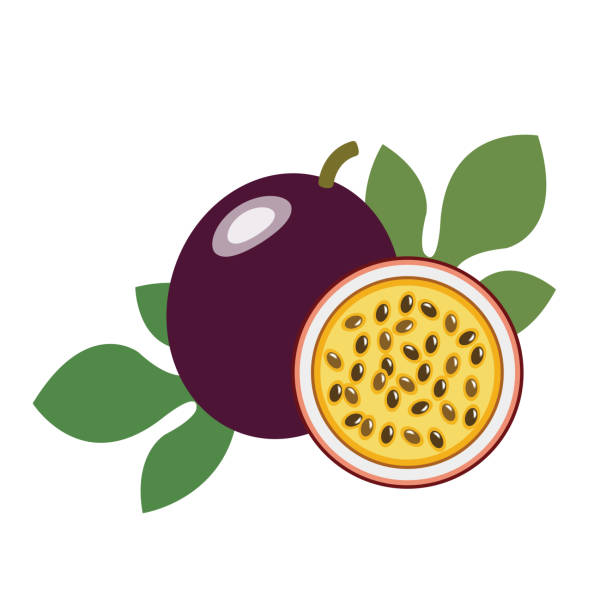 illustrazioni stock, clip art, cartoni animati e icone di tendenza di healthy organic passion fruit, colorful tropical nature fresh fruit objects. - passiflora